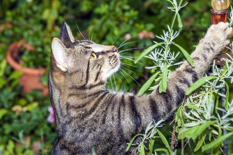 Répulsifs Contre Les Chats : Les Méthodes Qui Fonctionnent tout Repulsif Chat Jardin Naturel
