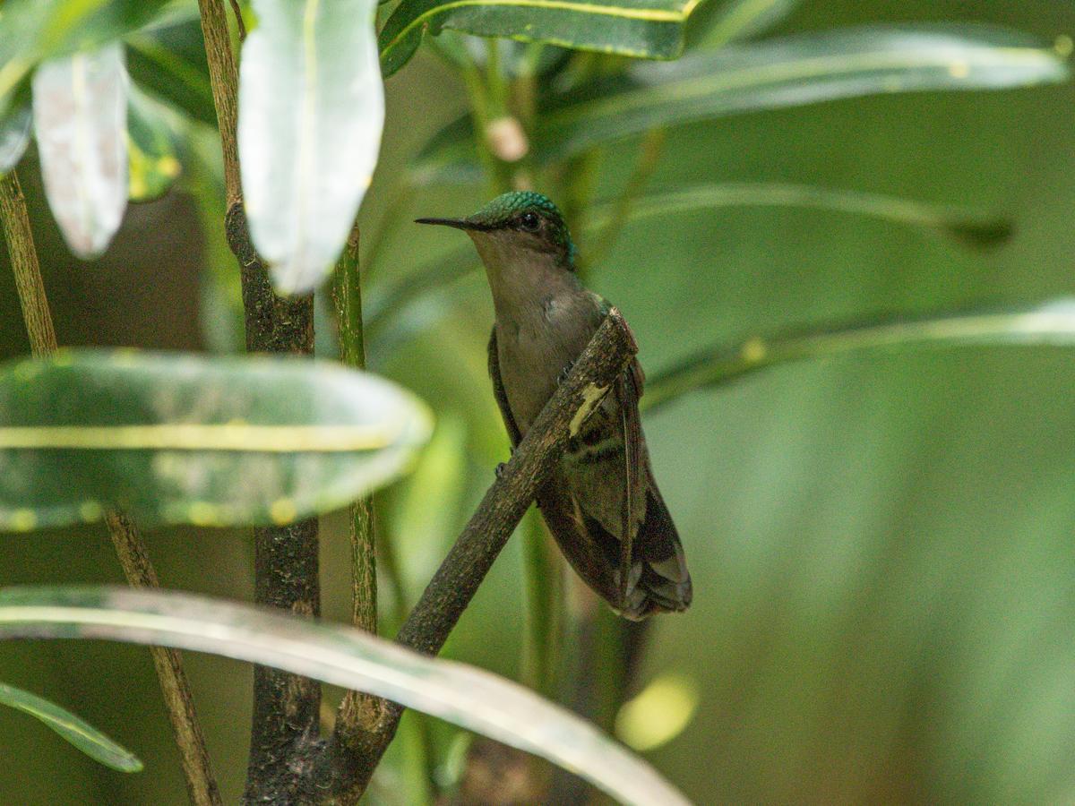 Resort Village Au Jardin Des Colibris, Deshaies, Guadeloupe ... à Au Jardin Des Colibris