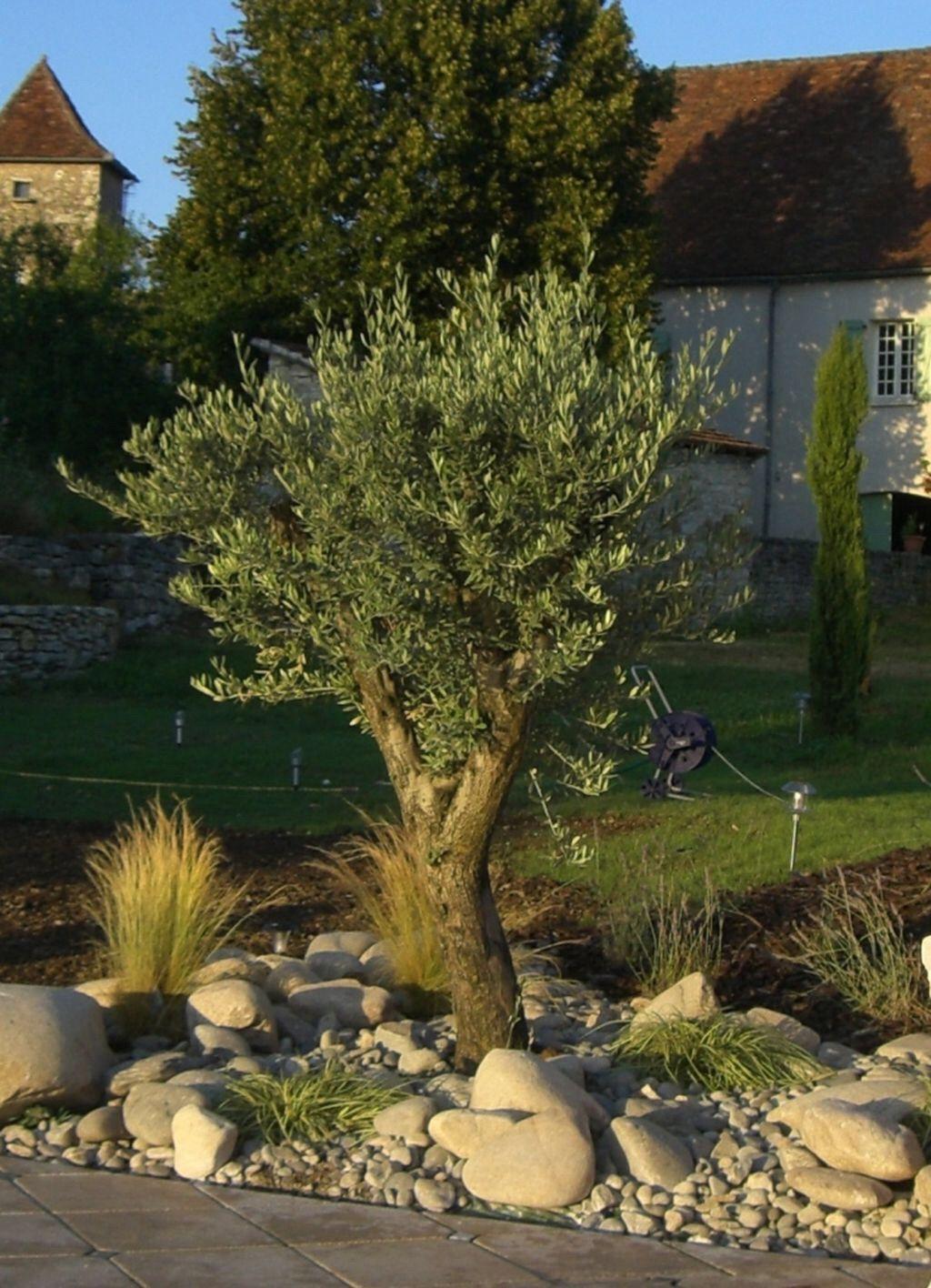 Rocaille Mediterraneenne | Outdoor | Amenagement Jardin ... encequiconcerne Amenagement Petit Jardin Mediterraneen