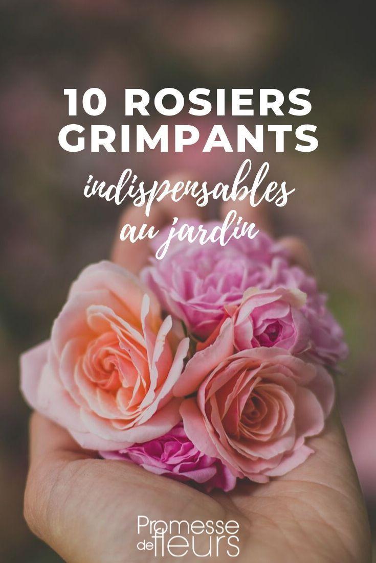 Rosiers Grimpants : Les 10 Meilleures Variétés | Rosier ... encequiconcerne Le Bon Coin Serre De Jardin