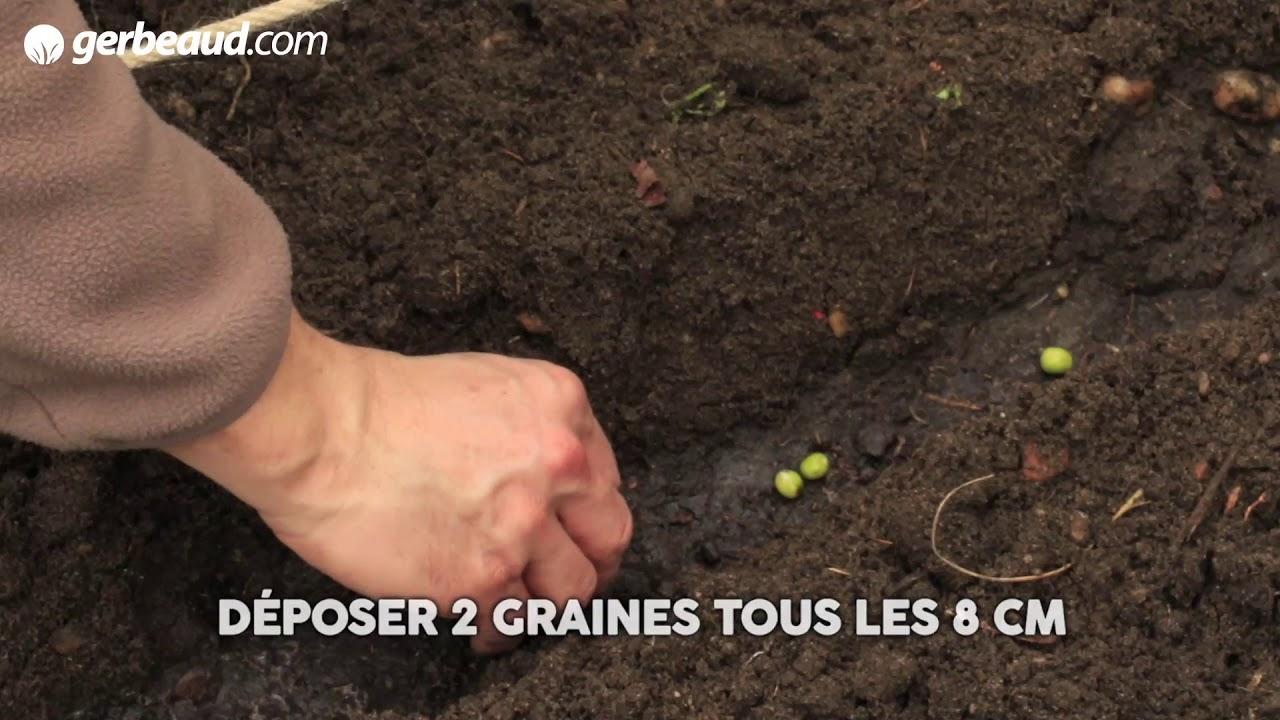 Semer Et Récolter Des Endives dedans Semoir Jardin Potager