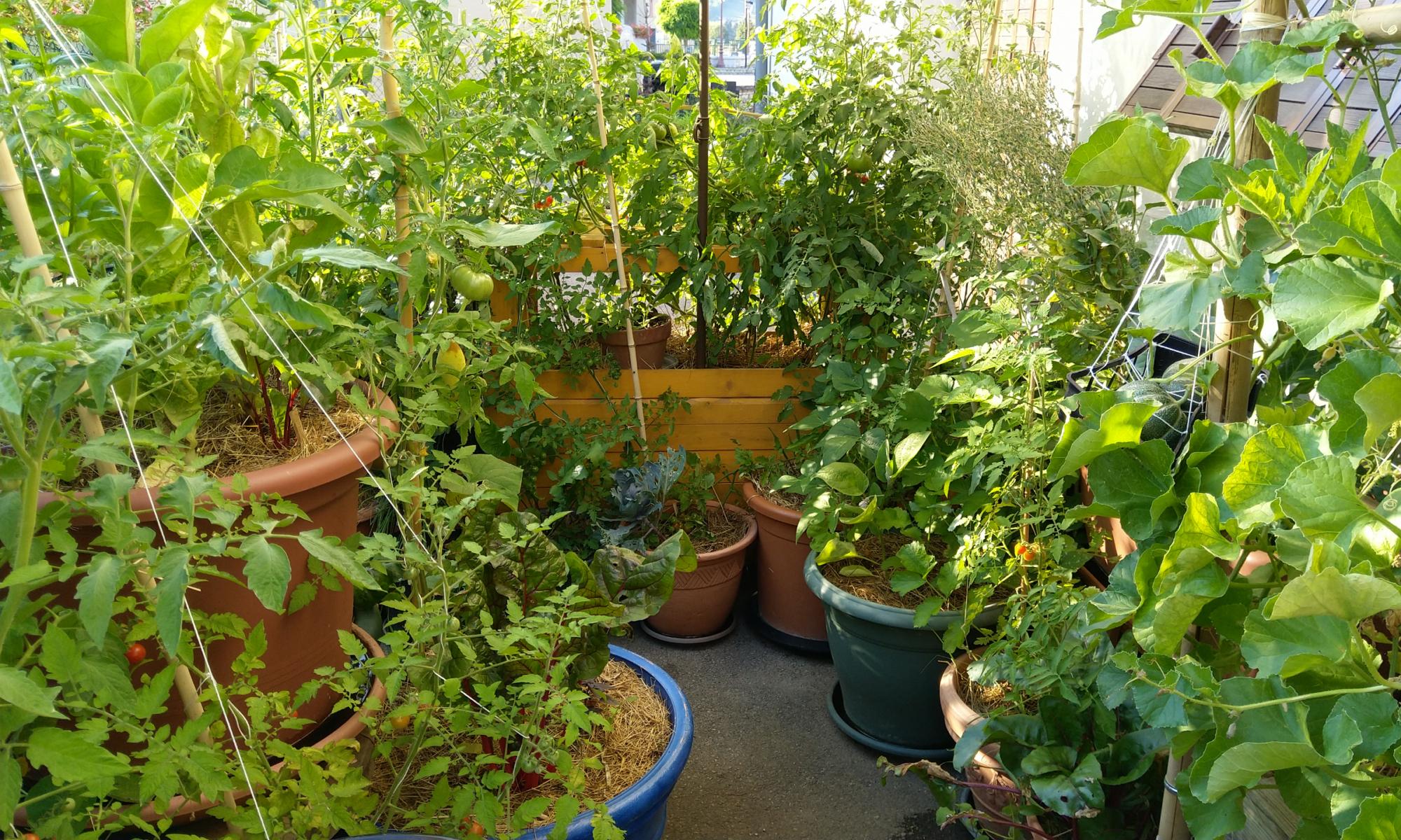 S'inspirer De La Permaculture Pour Faire Un Potager Sur Son ... encequiconcerne Faire Un Jardin Sur Son Balcon