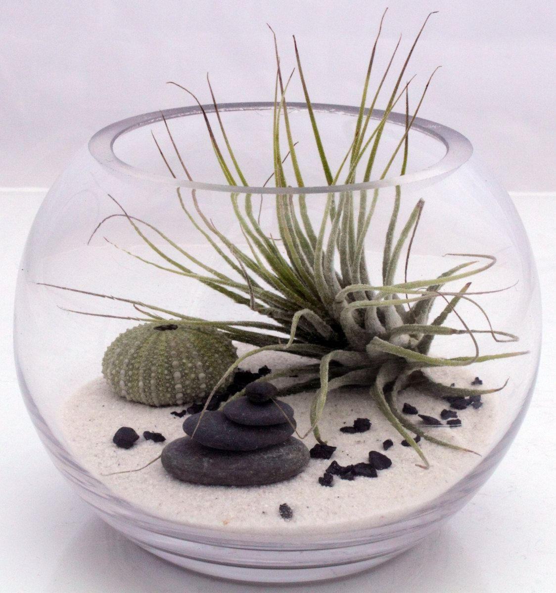 Small Desktop Zen Garden Terrarium Kit- Live Tillandsia ... destiné Plante Jardin Zen