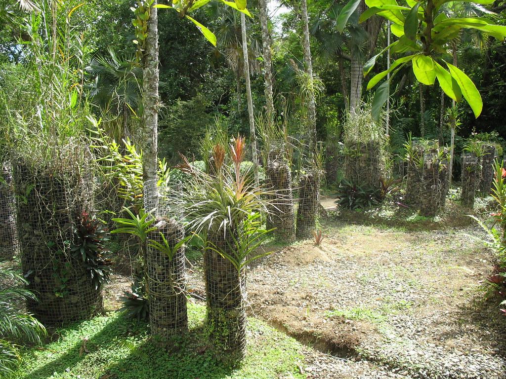 Substrat D'écorces De Coco Grossier | [Jardin Botanico, Sant ... à Ecorces Jardin