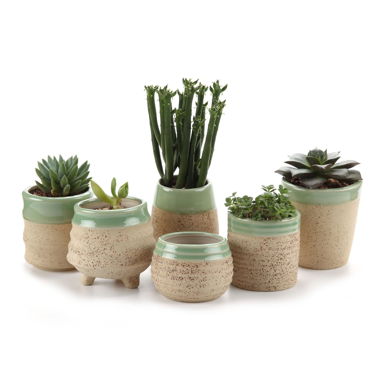 T4U Sırlı Çömlek Kil Set Etli Saksı/kaktüs Bitki Saksı Çiçeği  Pot/konteyner/ekici Bej Paket 1 Paketi 6 Bir pour Pot Pvc Jardin