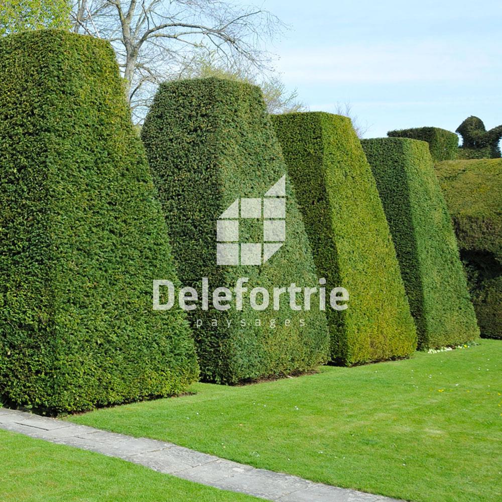 Taille Des Arbuste Et Topiaire Pour Entretien Et Deco Jardin ... tout Arbustes Decoration Jardin