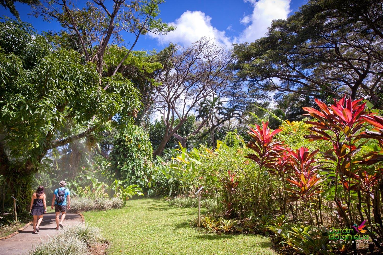 The Botanical Garden Of Deshaies - Au Jardin Des Colibris intérieur Au Jardin Des Colibris