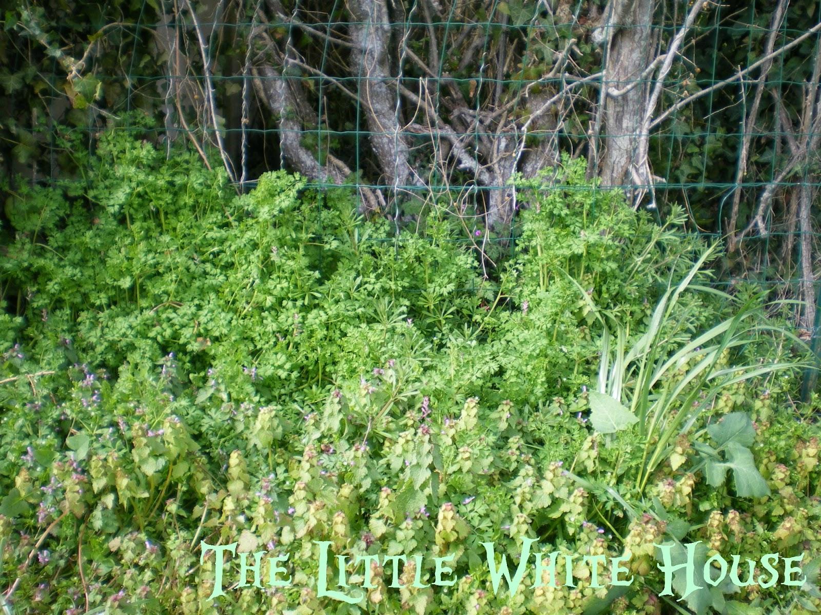 The Little White House On The Seaside: Strawberry (Petite ... avec Petite Barriere Jardin