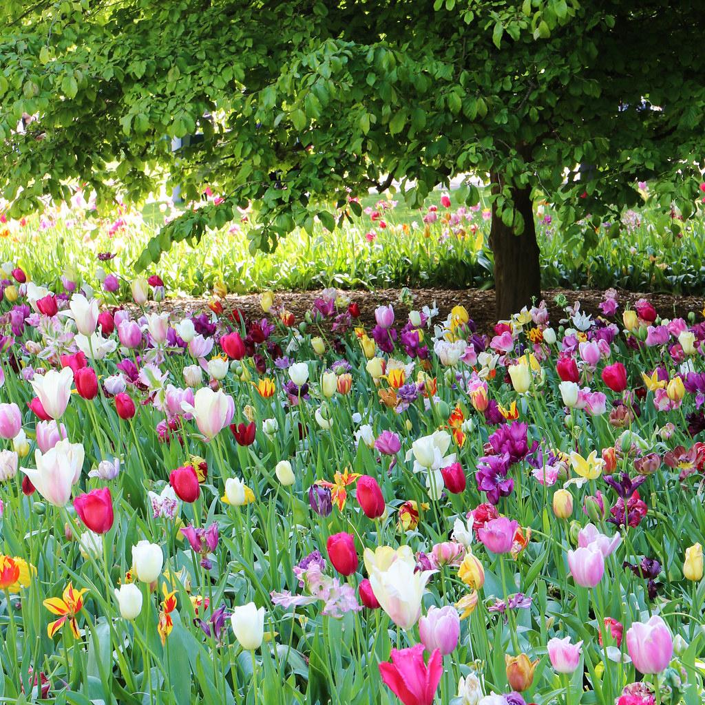 The World's Best Photos Of Amsterdam And Tulip - Flickr Hive ... dedans Jardin De Keukenhof