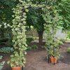 Titan Garden Arch - 7' Tall Black Metal | Gardeners ... serapportantà Tonelle De Jardin