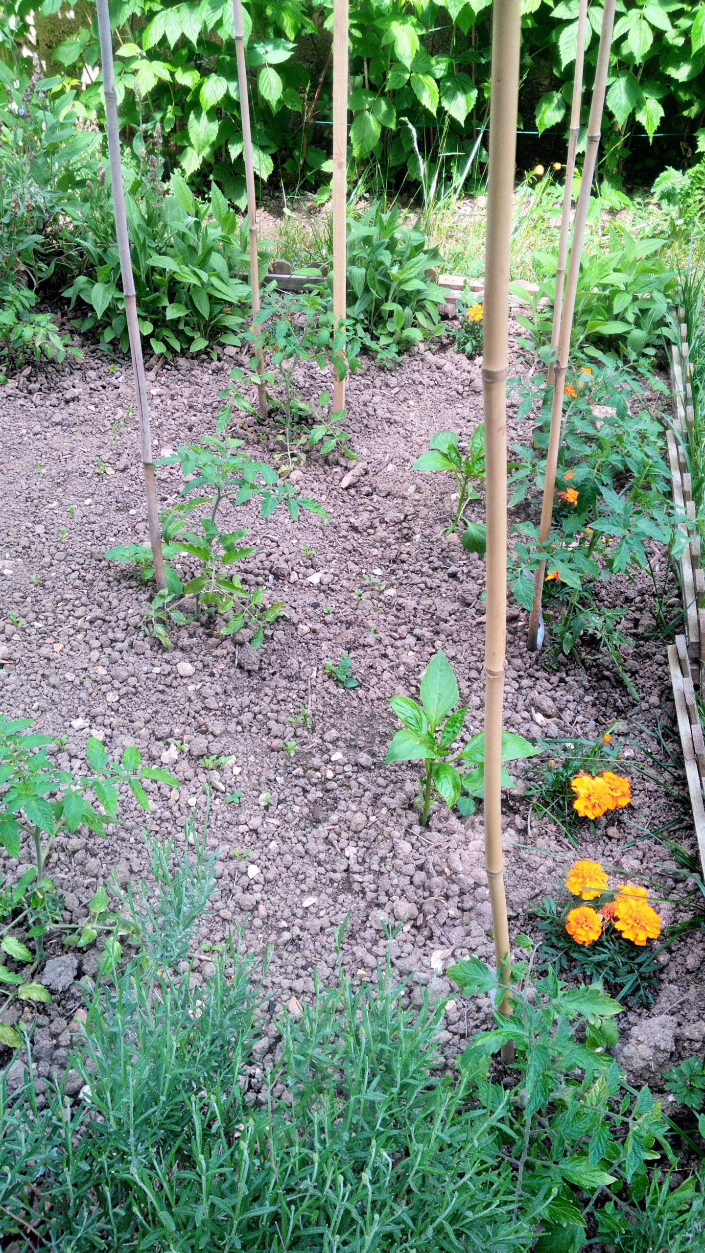 Top 20 Des Actions A Faire Au Potager Et Au Jardin En Mai intérieur Comment Faire Fuir Les Taupes De Mon Jardin