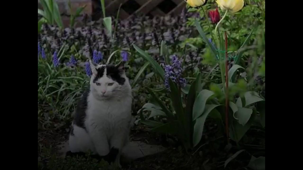 Top 4 Méthodes Pour Éloigner Les Chats De Son Potager - Ooreka.fr avec Chasser Les Chats Du Jardin
