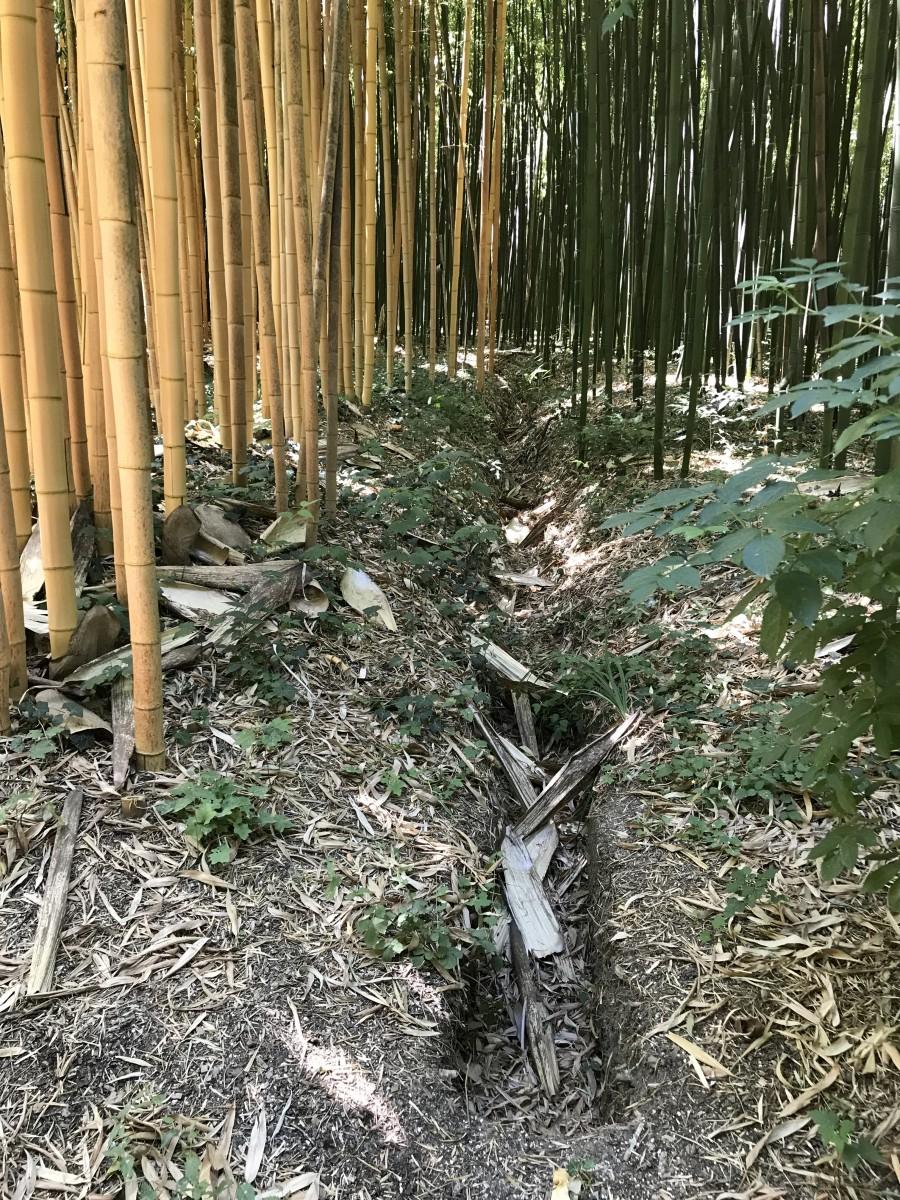 Tout Ce Qu'il Faut Savoir Sur Le Bambou! | La Palmeraie Fr pour Comment Eliminer Les Bambous Dans Un Jardin