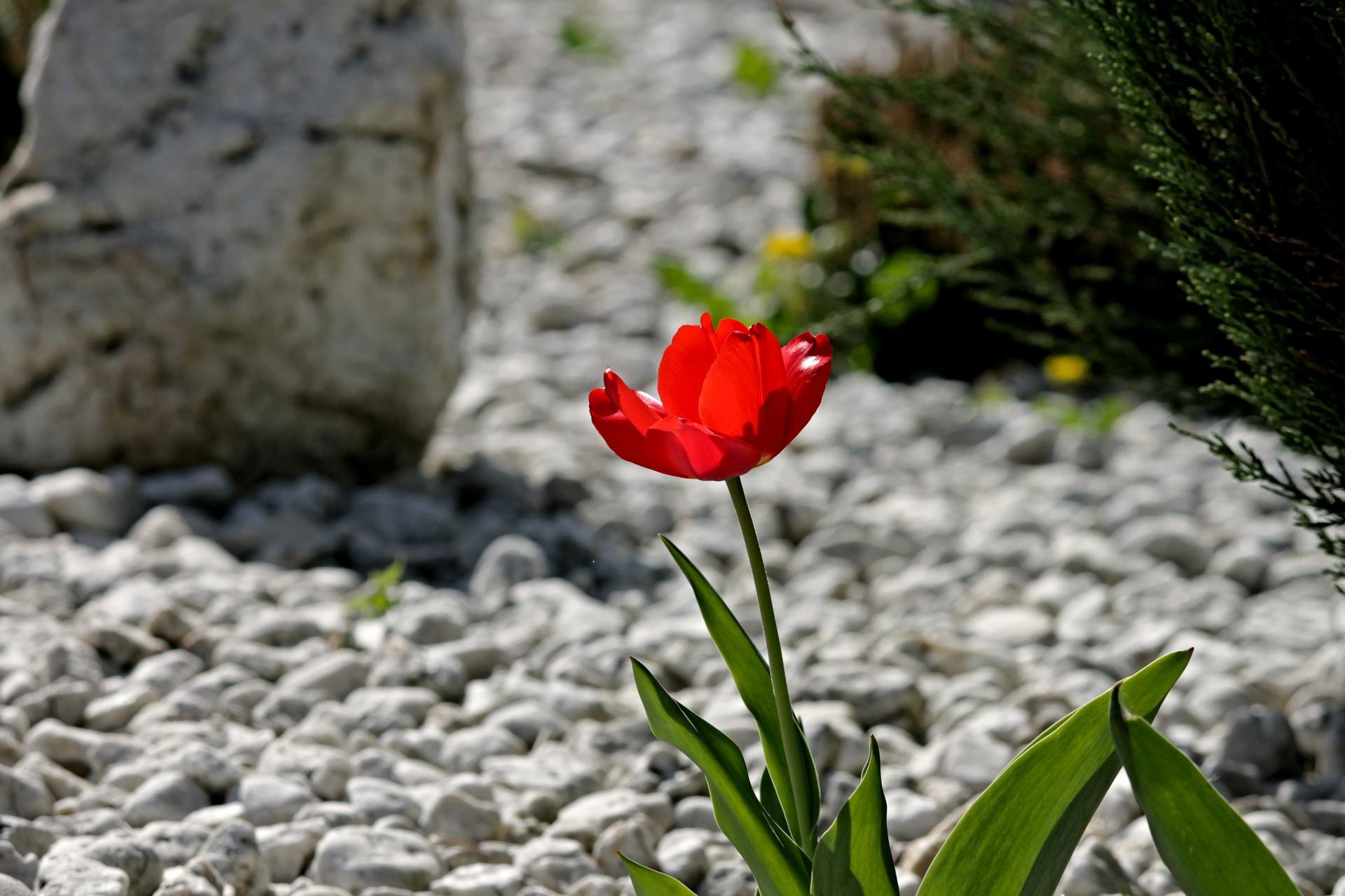 Toutes Les Astuces Pour Réaliser Un Beau Jardin Minéral pour Modeles Jardins Avec Galets