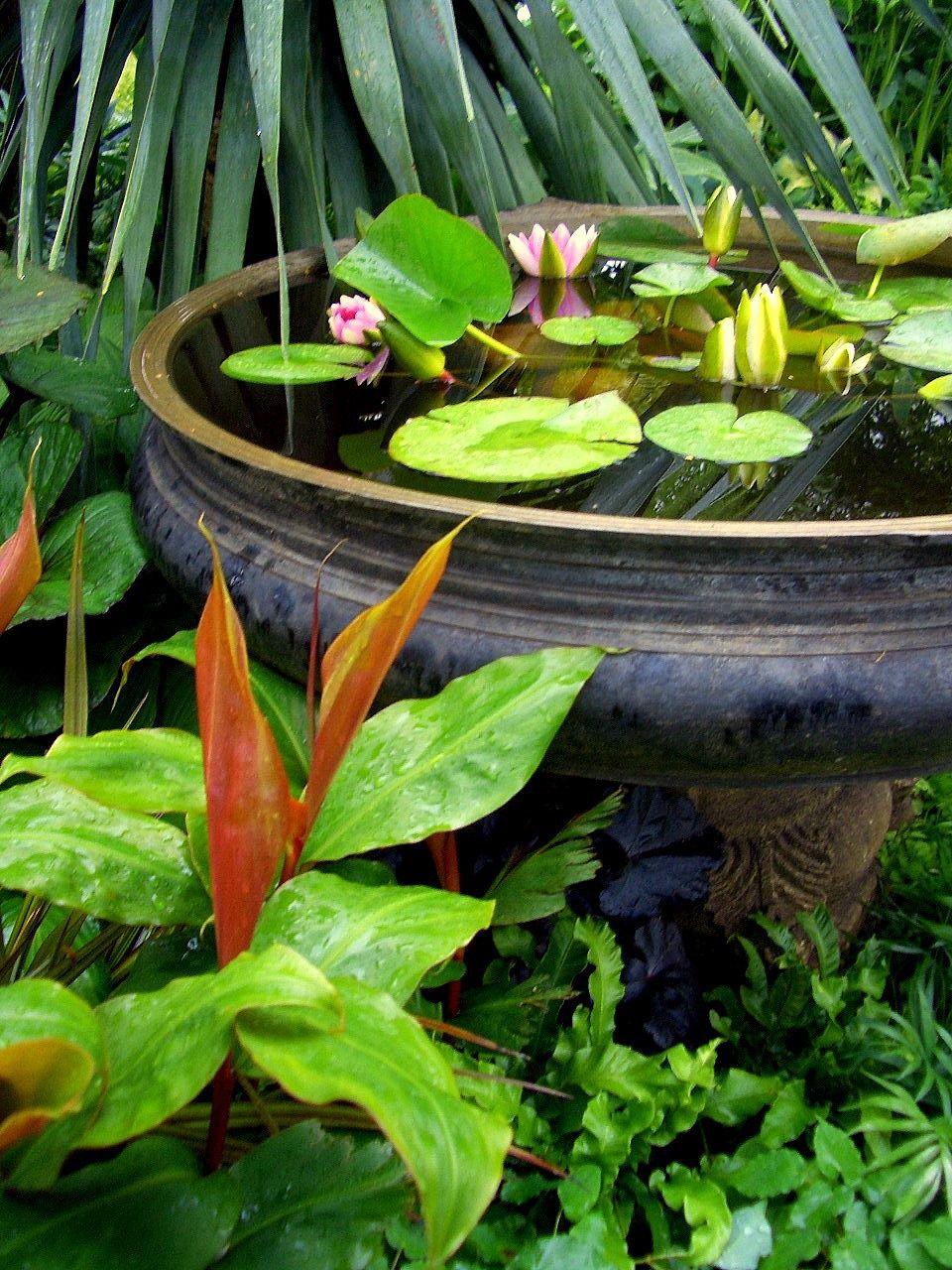 Tropical Garden. | Mini Jardins, Jardin D'eau Et Jardins dedans Petit Bassin Pour Jardin