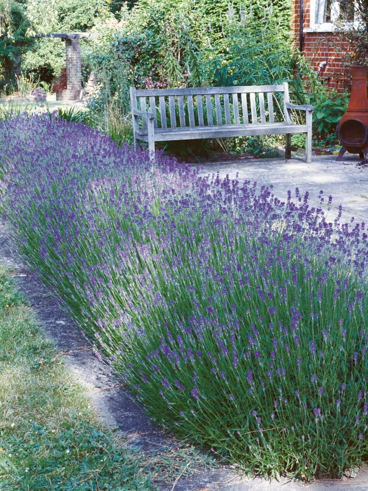 Types Of Lavender | Beaux Jardins, Idées Jardin Et Jardins concernant Delimitation Jardin
