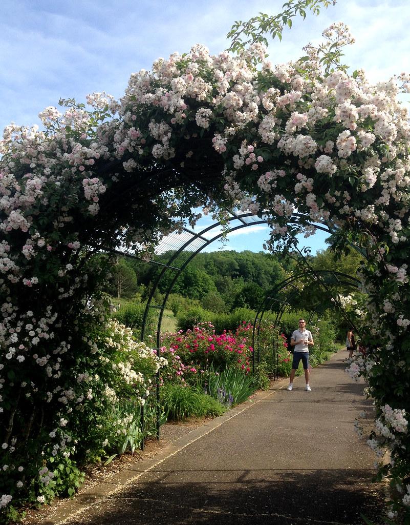 Un Arceau De Roses Blanches Au Jardin Botanique De Villers ... avec Arceau Jardin