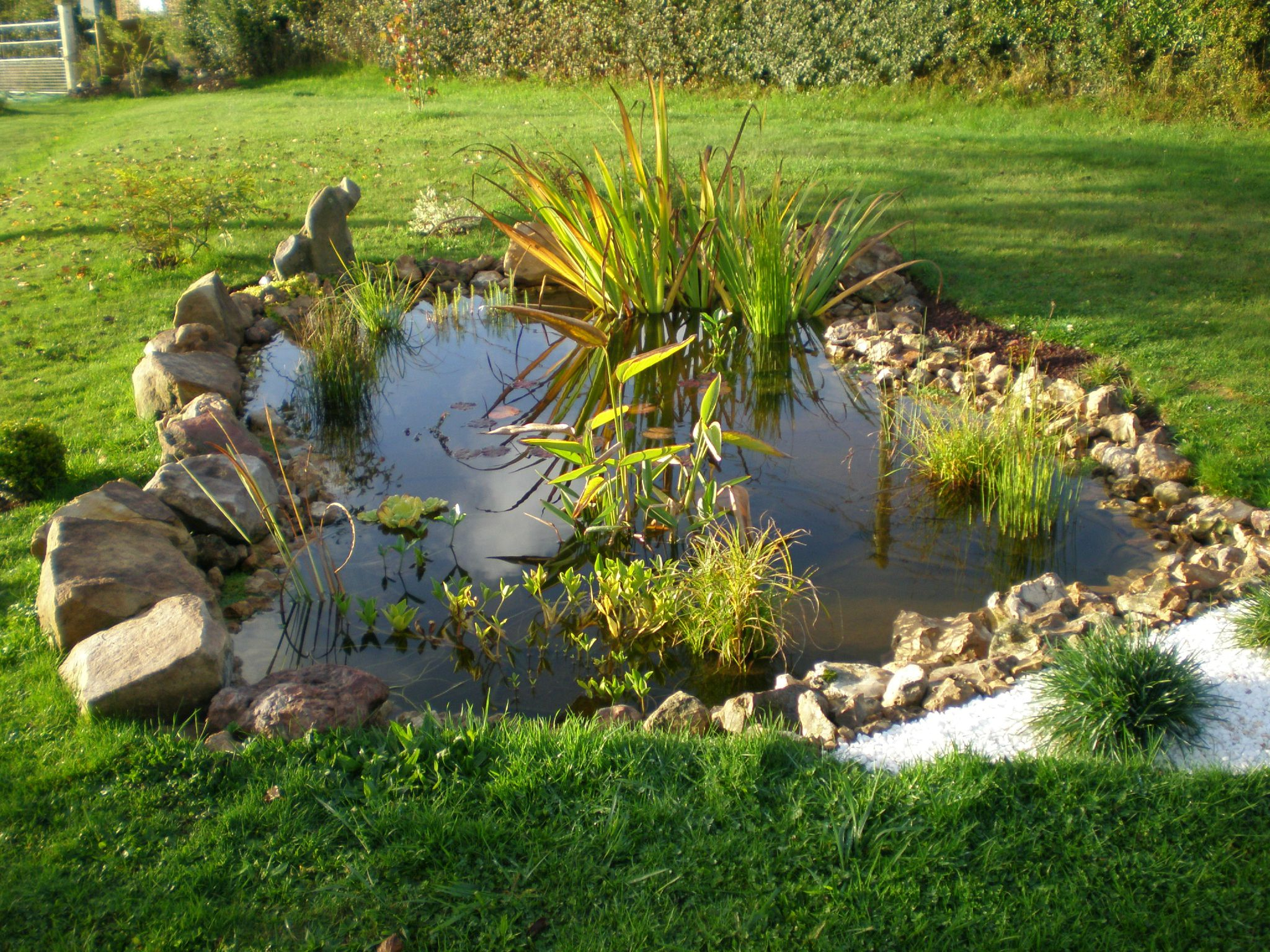Un Bassin Dans Mon Jardin, Pourquoi Pas ! - Lavande Violette destiné Bassin Pour Petit Jardin