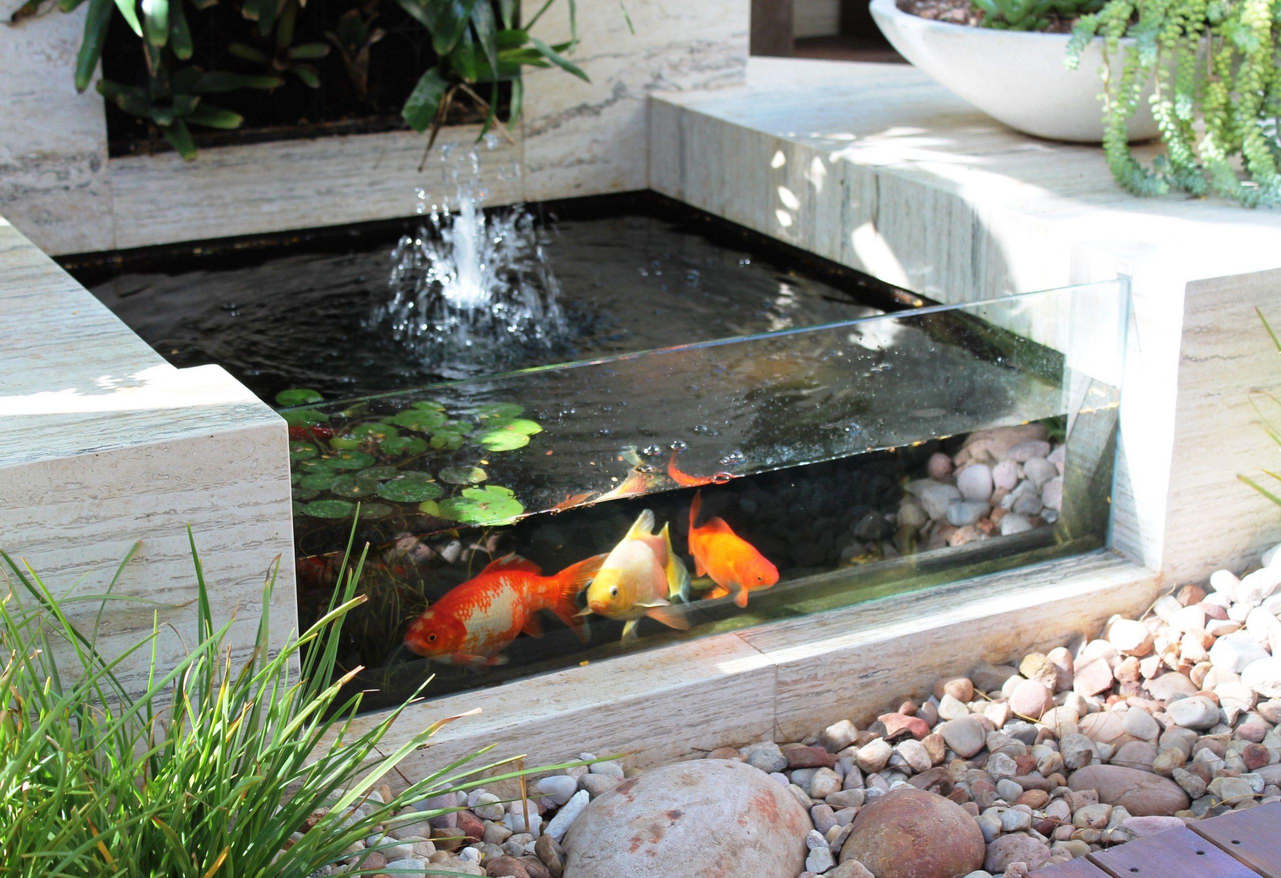 Un Bassin De Jardin Avec Une Paroi Transparente, Comme Un ... pour Petit Jardin Avec Bassin