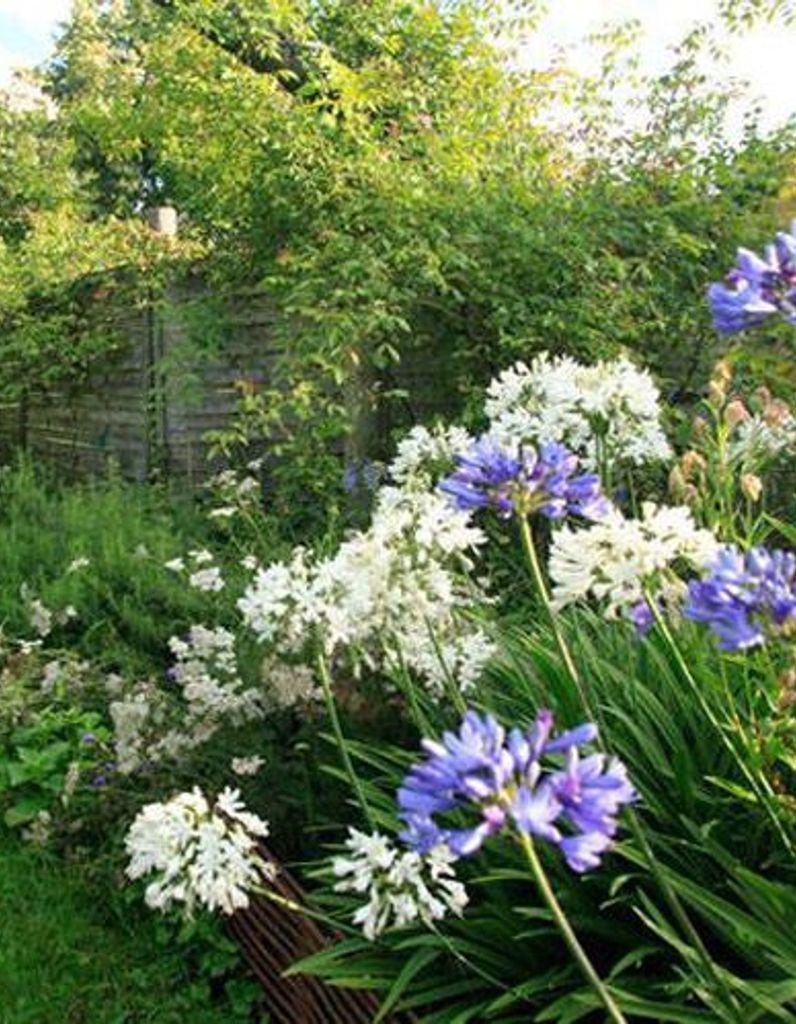 Un Massif Fleuri Plein De Couleurs Pendant Six Mois - Elle ... pour Astuce Deco Jardin Recup
