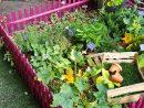 Un Mini Potager Protégé Par Des Barrière Roses : Parfait ... avec Mini Jardin Balcon