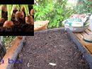 Un Mini-Potager Sur Le Balcon Pour L'été-حديقة صغيرة على الشرفة أو البلكونة  أو السطح لفصل الصيف pour Mini Jardin Balcon