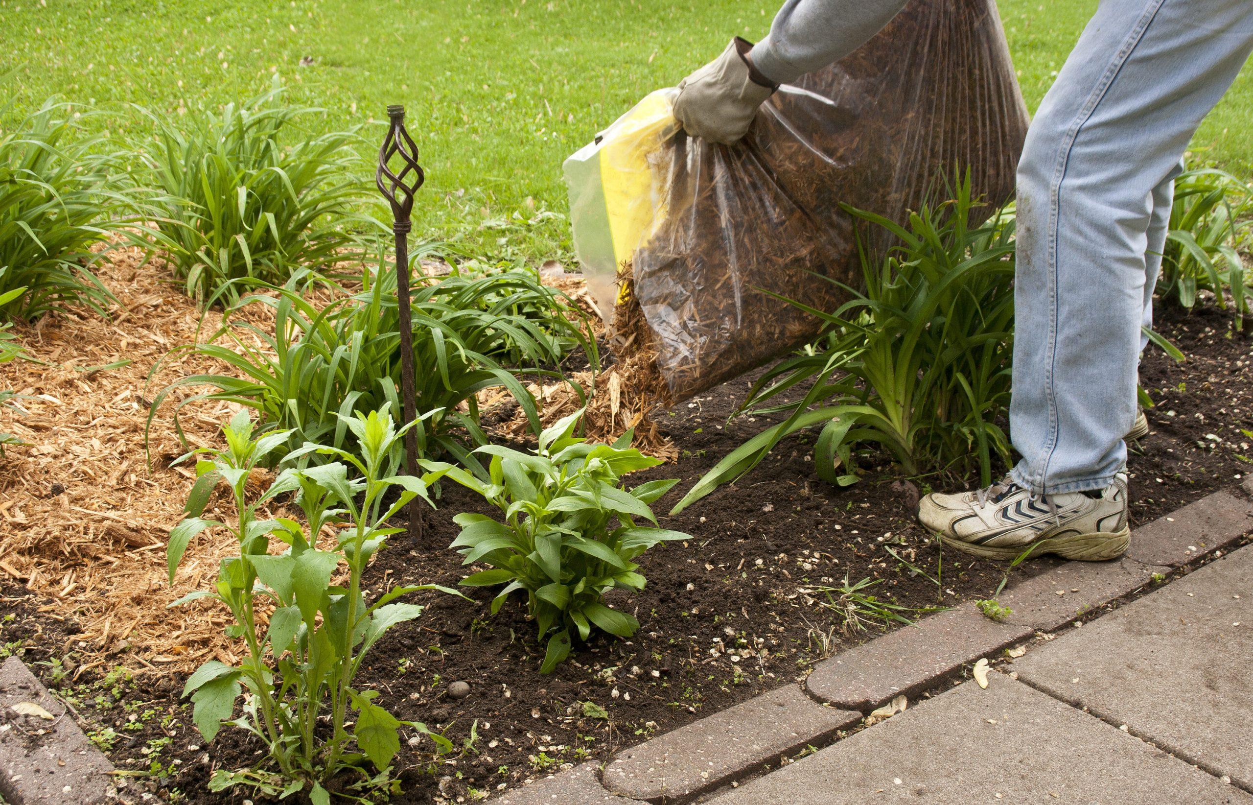 Un Paillage Naturel Pour Votre Jardin - Blog Oléo-Mac encequiconcerne Copeaux De Bois Jardin