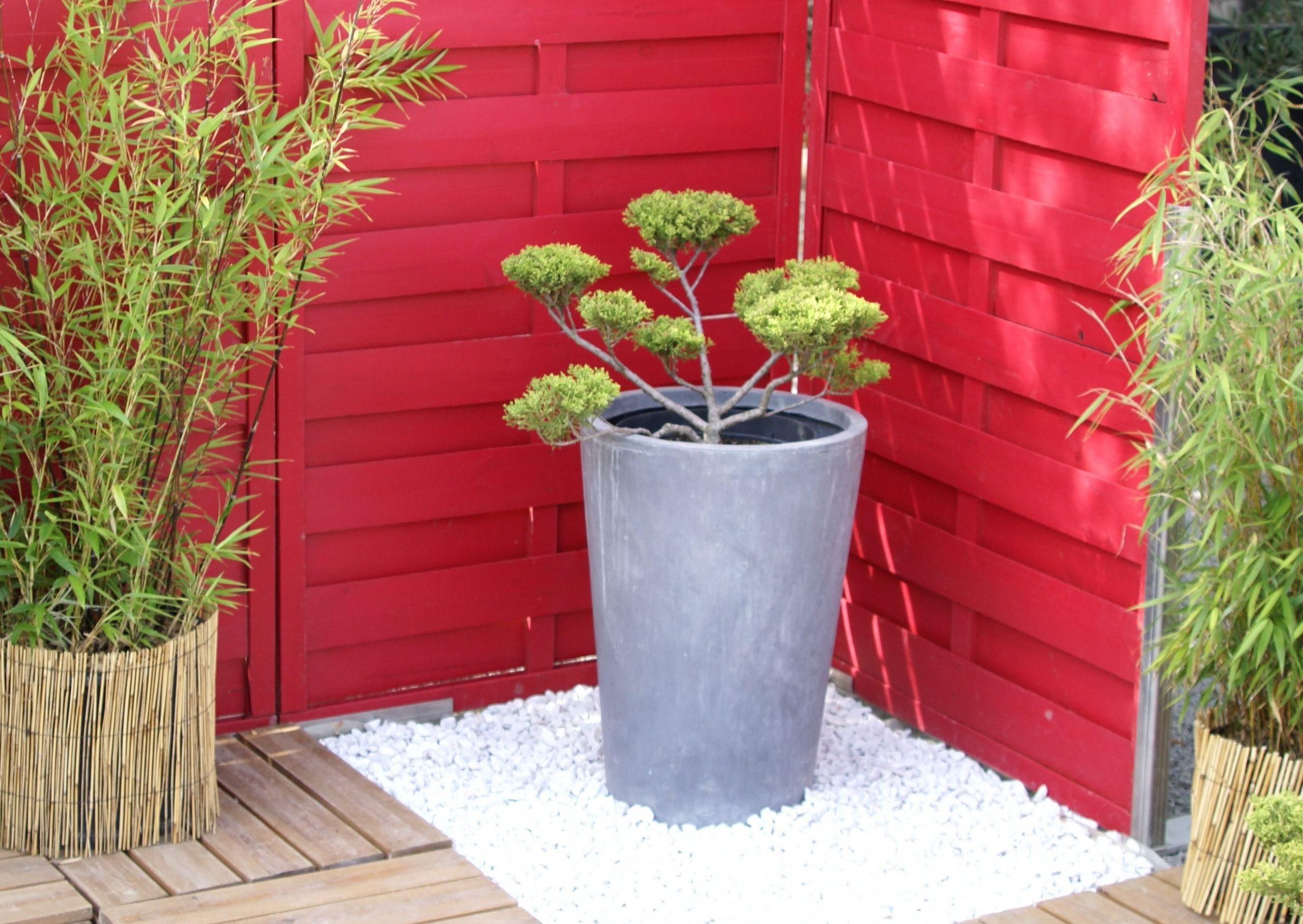 Un Petit Coin Terrasse Japonisant : Arbre À Nuage, Bambou ... intérieur Petit Jardin Japonisant