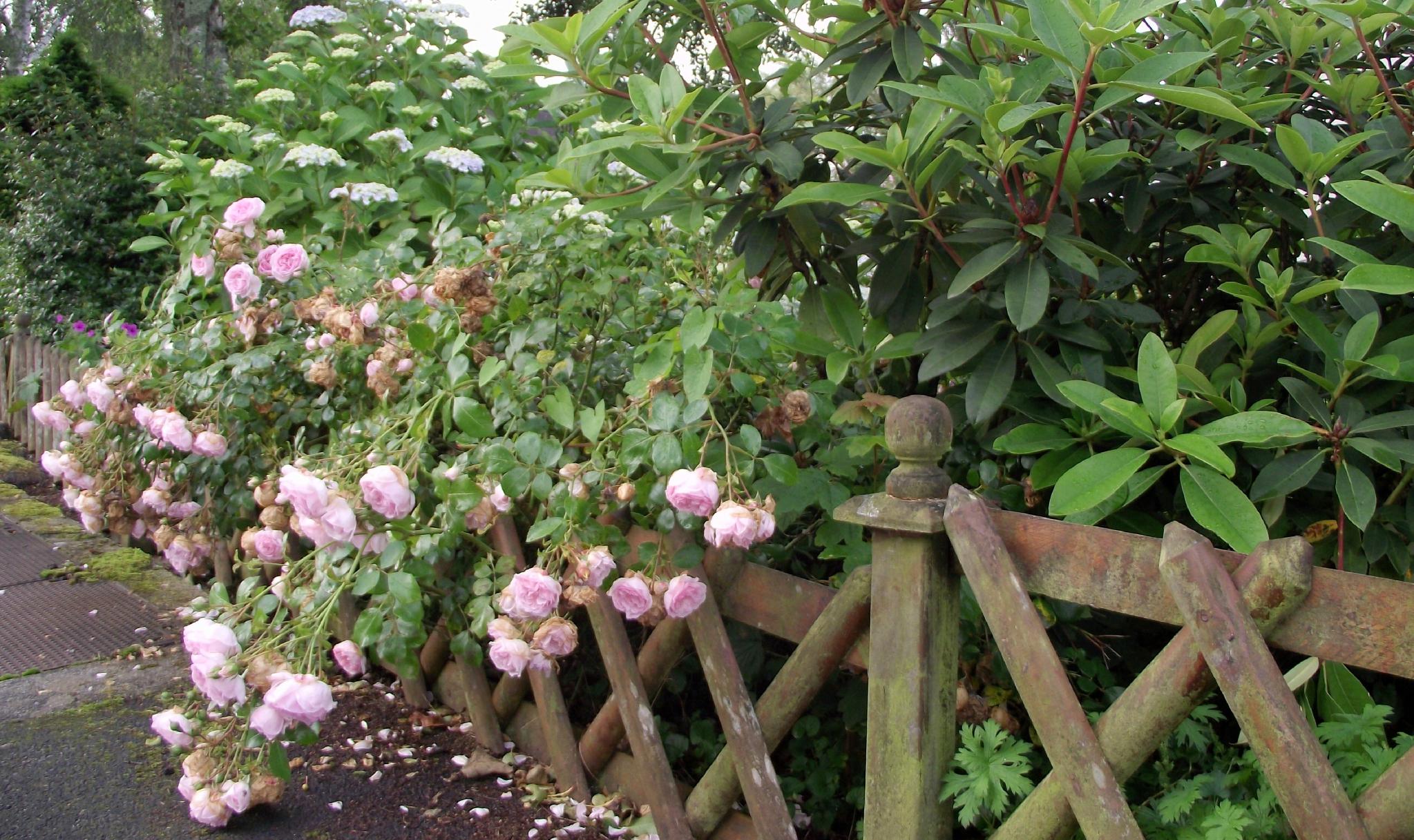 Une Clôture En Bois - Le Cottage De Gwladys serapportantà Petite Barriere Jardin