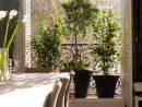 Urban-Green - Un Jardin À Vos Fenêtres, Paysagiste Paris pour Mini Jardin Balcon