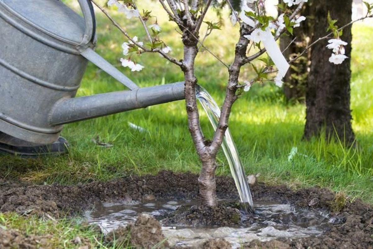 Utiliser De La Chaux Dans Un Jardin à La Chaux Pour Le Jardin