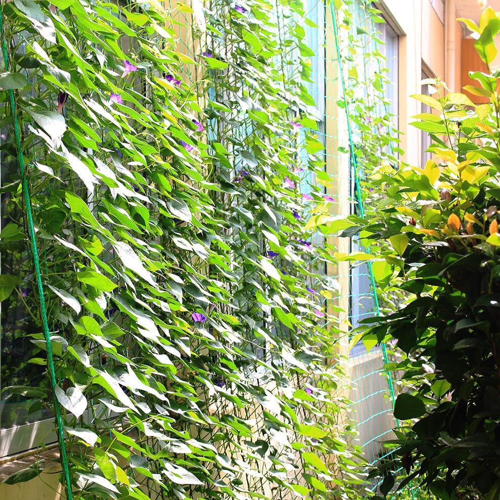Version Améliorée Durable Jardin Millipore Nylon Net Escalade Clôture  Plantes Fruitières Anti-Périphériques Anti-Oiseaux Treillis Clôture Net  3,6X5 M pour Treillis Blanc Jardin