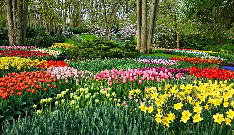 Visit The Keukenhof, The Largest Flower Garden In The World ... intérieur Jardin De Keukenhof