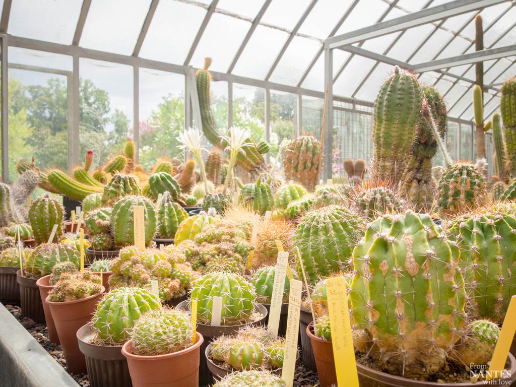 Visite Des Serres Du Jardin Des Plantes De Nantes à Exposition Serre De Jardin