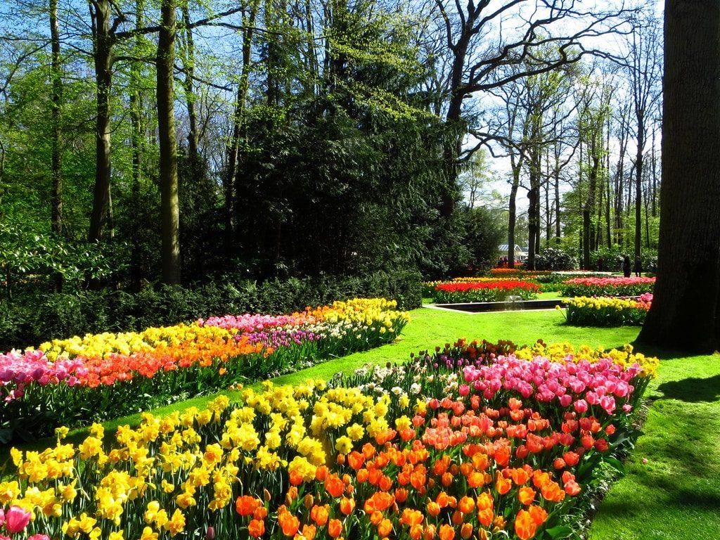Visiter Le Jardin De Keukenhof Depuis Amsterdam Ce Printemps ... avec Jardin De Keukenhof