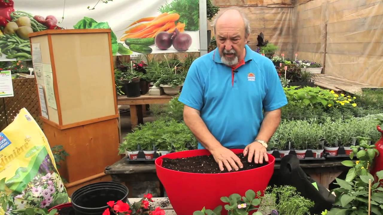 Votre Potager En Pot pour Jardin En Pots Potager