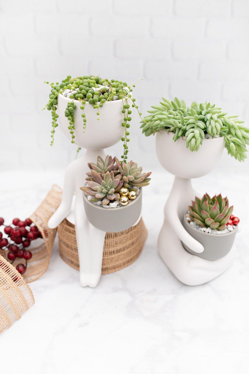 Warmhearted Friends | Succulents, Succulents In Containers ... tout Jardin En Kit Pret A Planter
