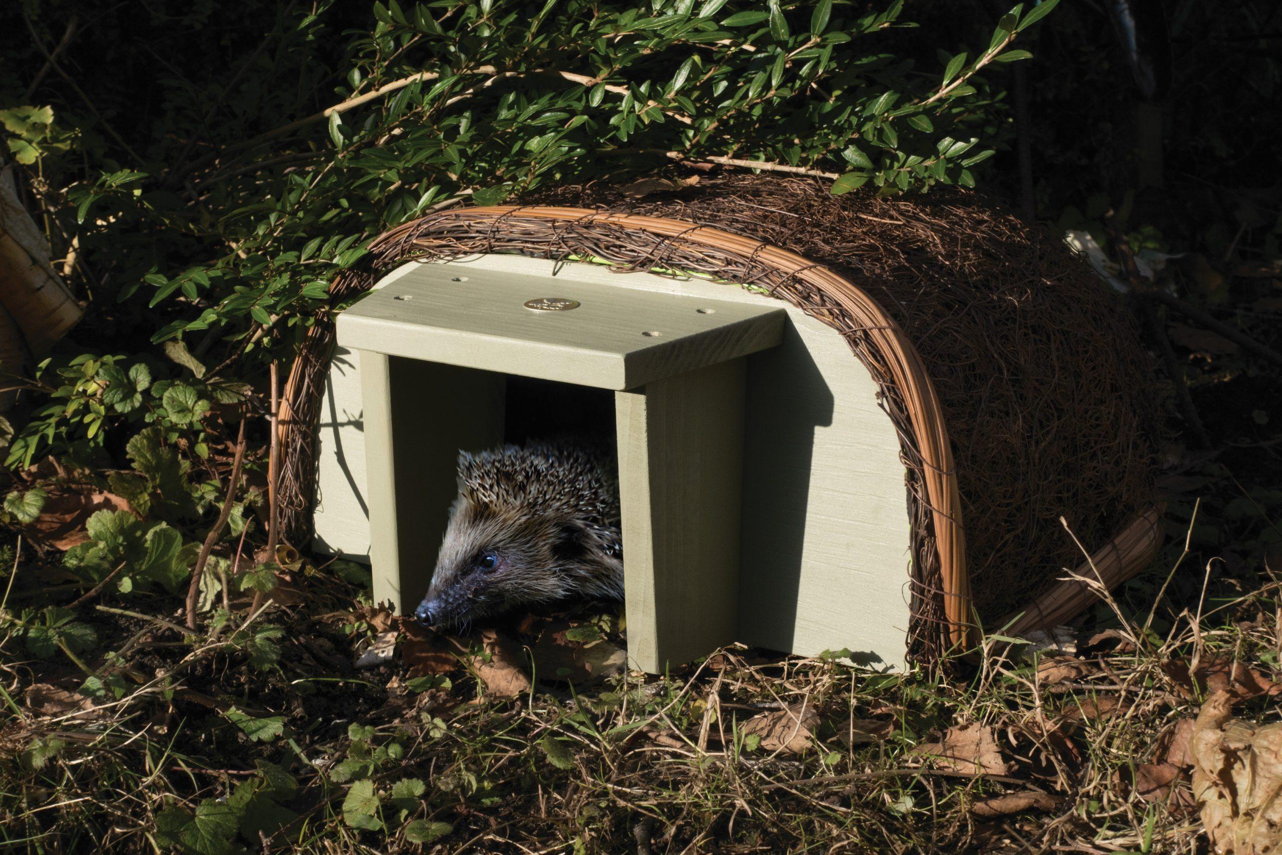 Wildlife Maison À Hérisson Entrée En Bois Abris Pour ... destiné Maison Pour Herisson Jardin
