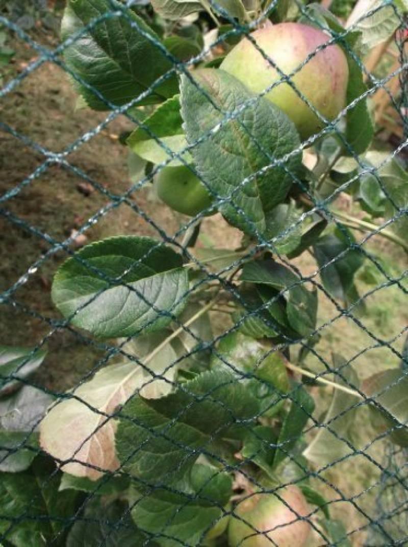 Xclou Filet À Oiseaux Protection Arbre Fruitier Filet De ... tout Filet De Protection Jardin