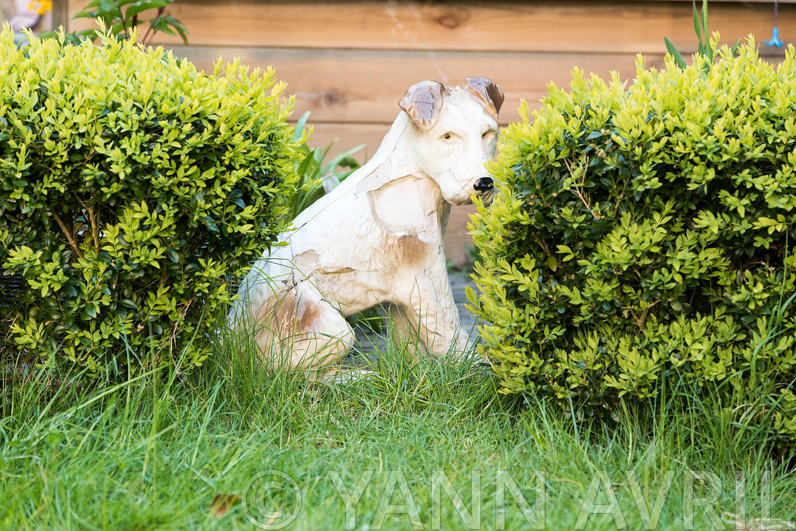 Yann Avril Photography | Garden And Nature Chassis Dans Un ... destiné Chassis De Jardin