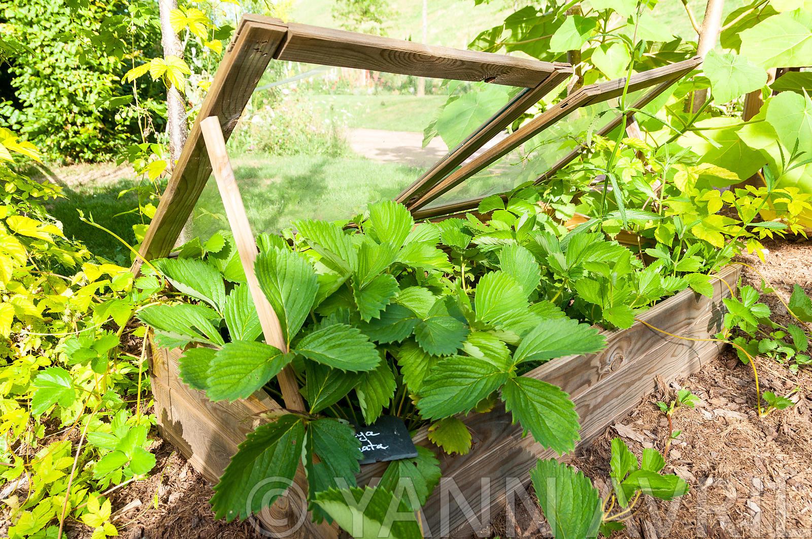 Yann Avril Photography | Garden And Nature Fraisiers Sous ... à Chassis De Jardin