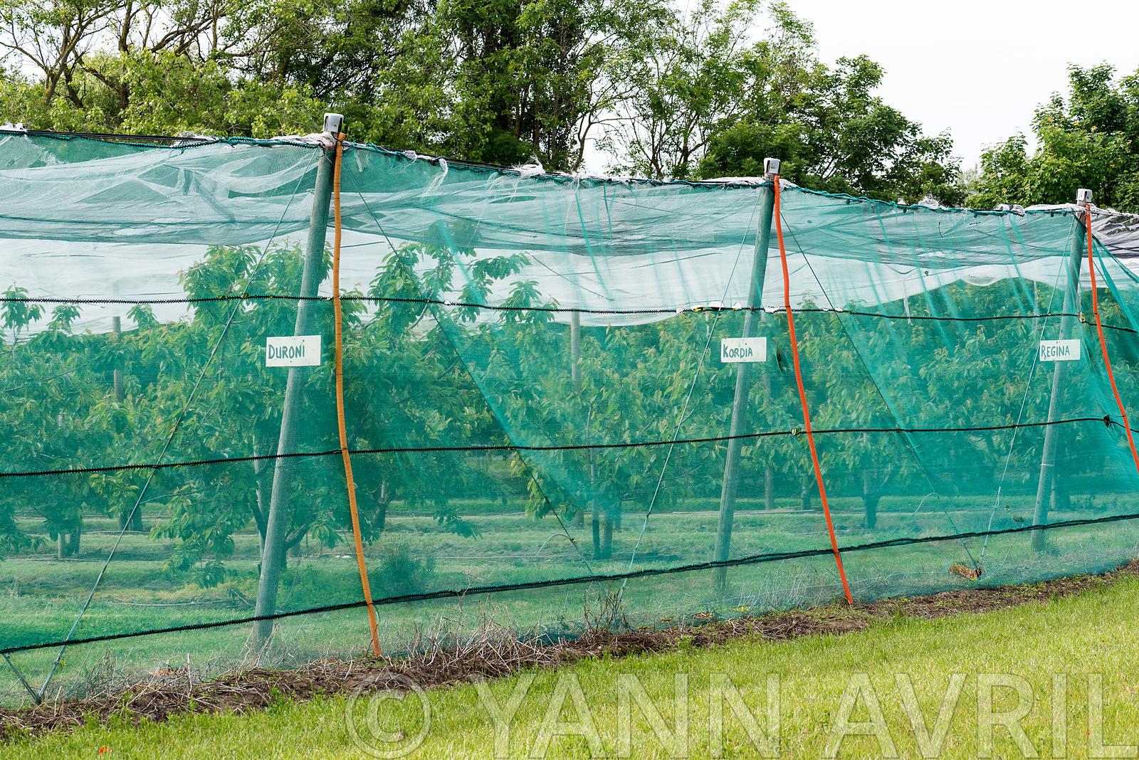 Yann Avril Photography | Garden And Nature Rhubarbe Dans Un ... intérieur Filet De Protection Jardin