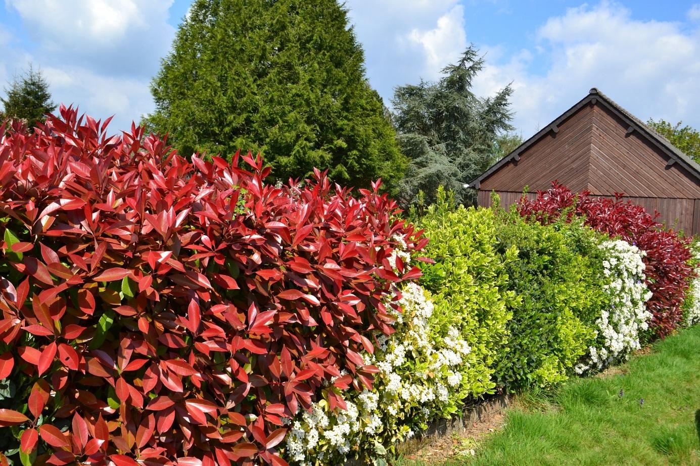 44 Façons De Se Cacher De Vos Voisins Au Jardin (Photos Et ... tout Cacher Vis A Vis Jardin Pas Cher