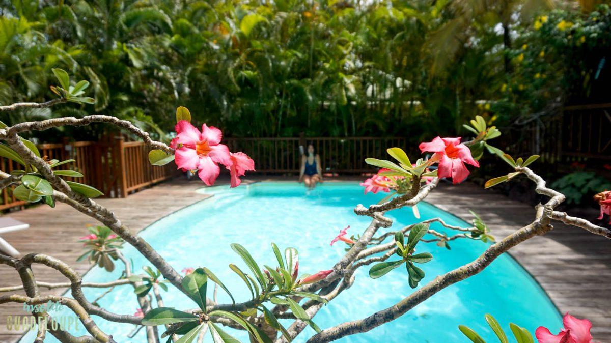 Au Jardin Des Colibris, Un Ecolodge Exceptionnel – Insolite ... destiné Jardin Des Colibris Guadeloupe