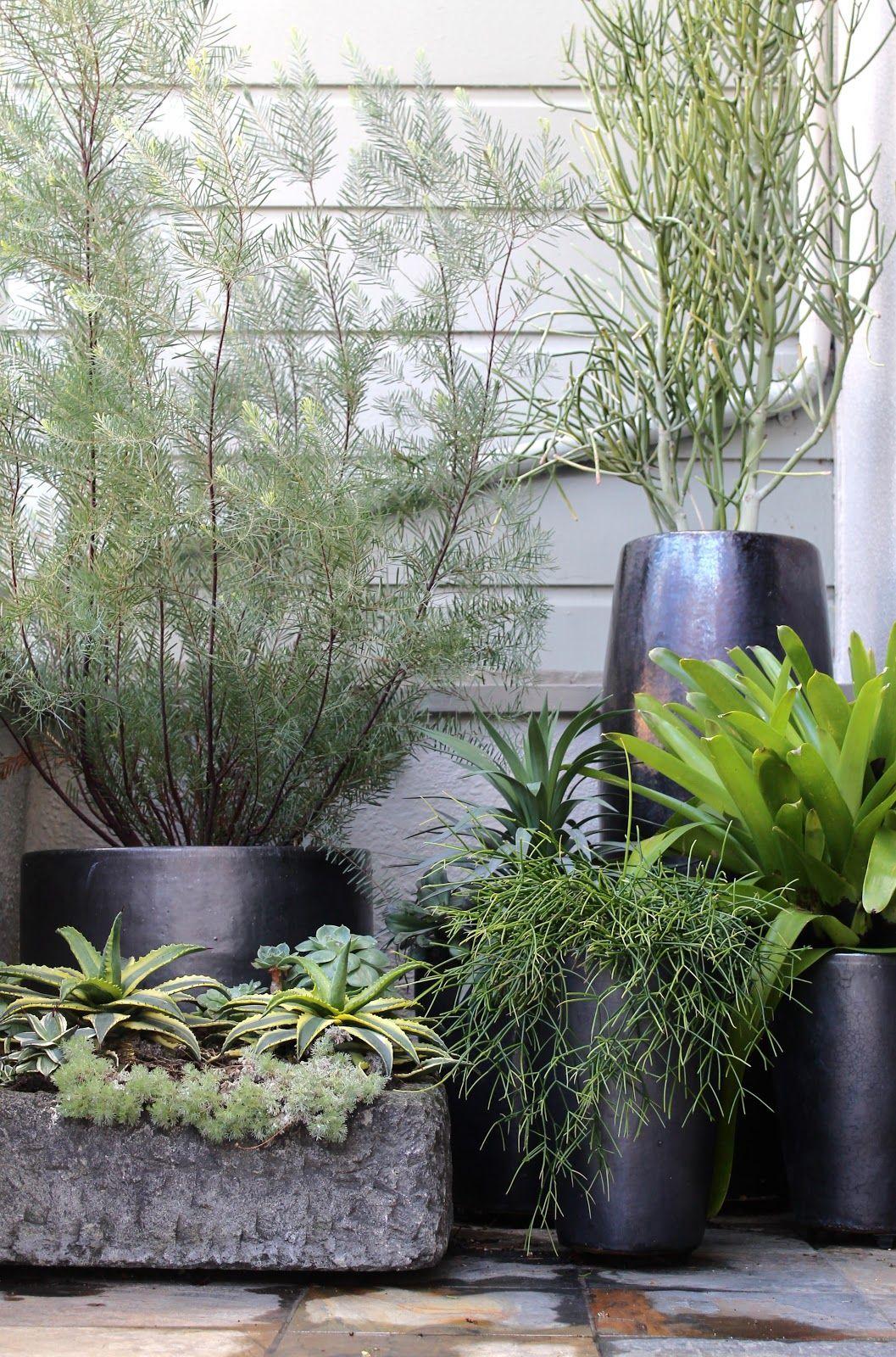 Black Pots   Decoration Jardin, Jardins Et Amenagement Jardin tout Pot Couleur Jardin
