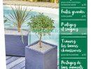 Catalogue Super U Du 19 Février Au 16 Mars 2019 (Jardin ... à Super U Jatdin