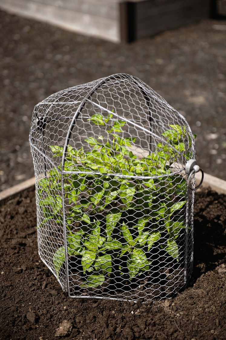 Chicken Wire Cloche Plant Protector, 3-In-1 | Gardeners ... intérieur Protection Grillage Jardin