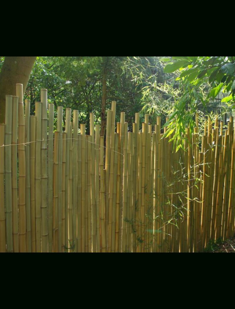 Clôture Bambou Japonaise Ø5Cm dedans Brise Vue Cloture Jardin