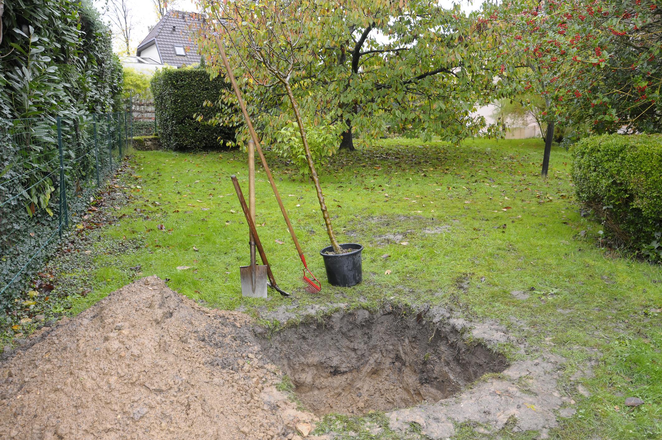 Conseils Jardinage : Planter Le Bon Arbre À La Bonne Place ! dedans Abonnement Mon Jardin Ma Maison