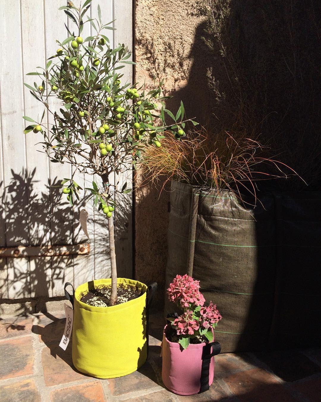 Épinglé Sur Terrasse destiné Pot Couleur Jardin